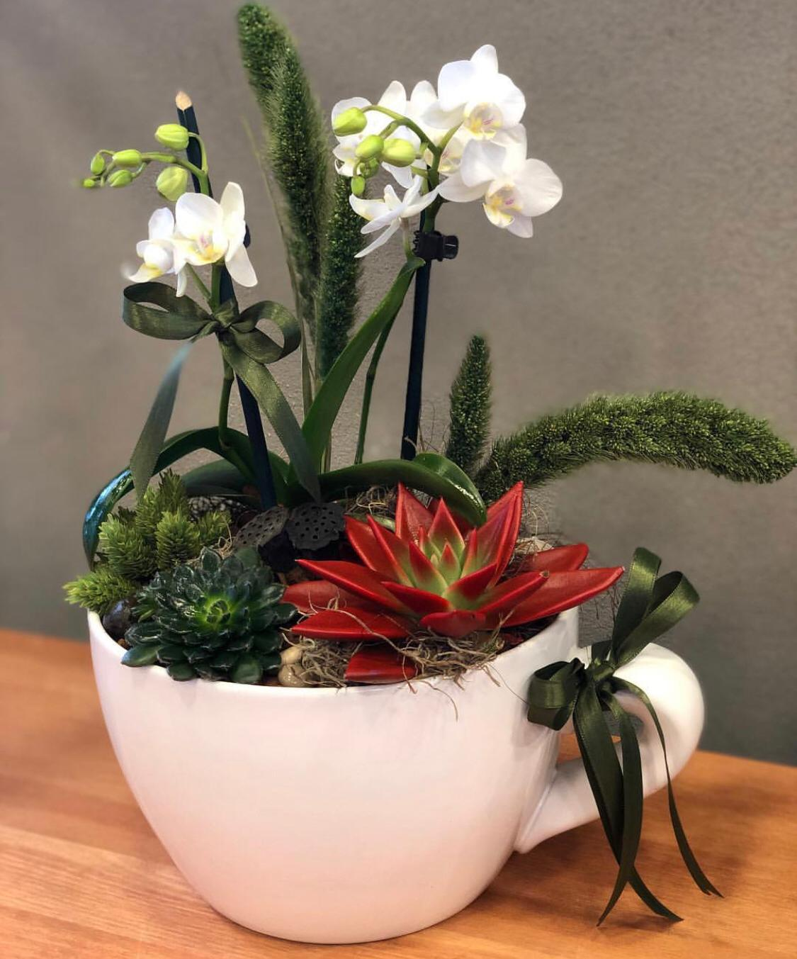 Dekoratif Seramik Saksıda Mini Orkide